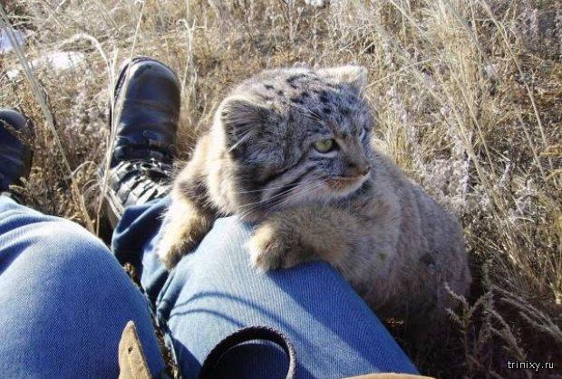 Фермер спас необычных котят