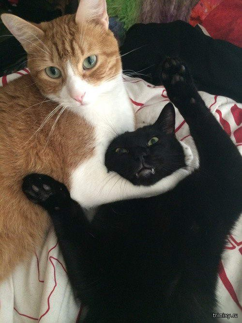 Приколы с котами. Часть 2