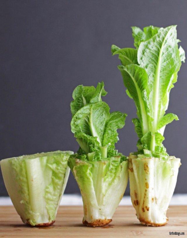 Овощи, которые можно вырастить вновь при помощи воды