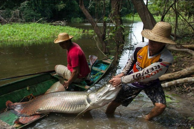 Опасности Амазонки и ее окресностей
