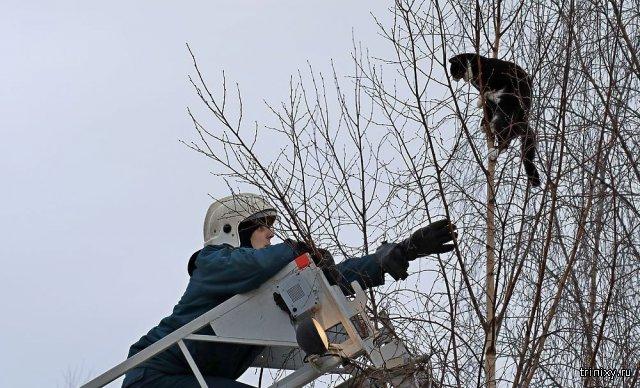Операция по спасению кота с верхушки дерева