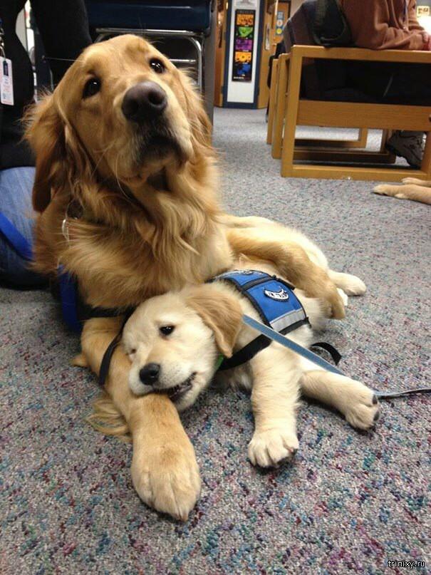 Служебные собаки в начале своей карьеры