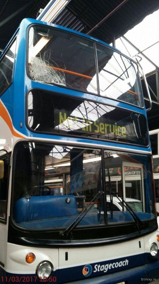 Фазан пробил лобовое стекло и прокатился на автобусе