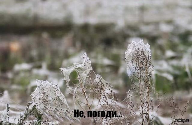 Снег посреди лета? Нет - гораздо хуже