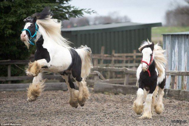 Спасение двух брошенных в поле лошадей