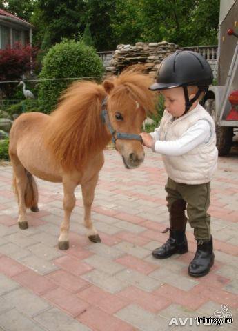 Маленькие лошадки