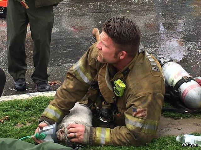 Пожарный реанимировал собаку, спасенную из пожара