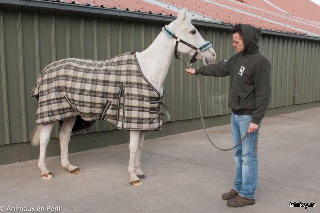 Волонтеры спасли лошадь и пони, закрытых на месяцы в сарае