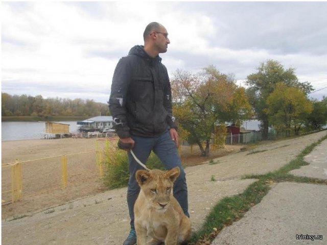 Люди-звери: львица Майя держит в страхе весь город, а хозяин бросается на журналистов