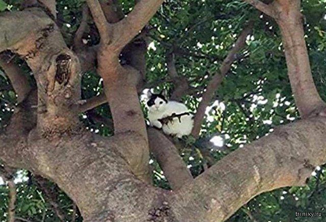 Полиция США отреагировала на вооруженного винтовкой кота