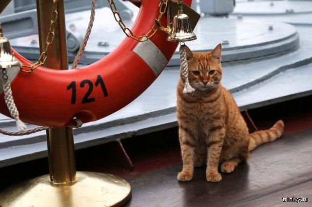 Министерство обороны РФ представило кота, ходившего на корабле к берегам Сирии