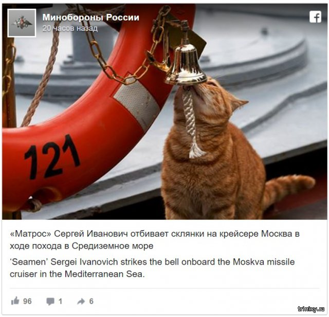 Министерство обороны РФ поделилось новыми фото кота-матроса