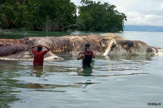 На пляже в Индонезии нашли тушу огромного 15-метрового монстра