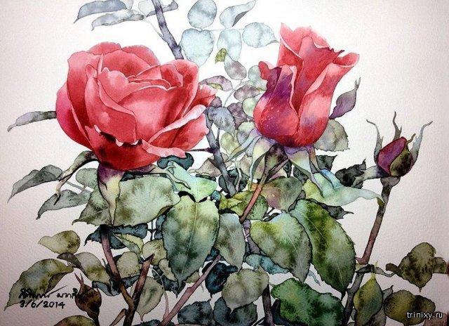 Художник-акварелист Ti Watercolor