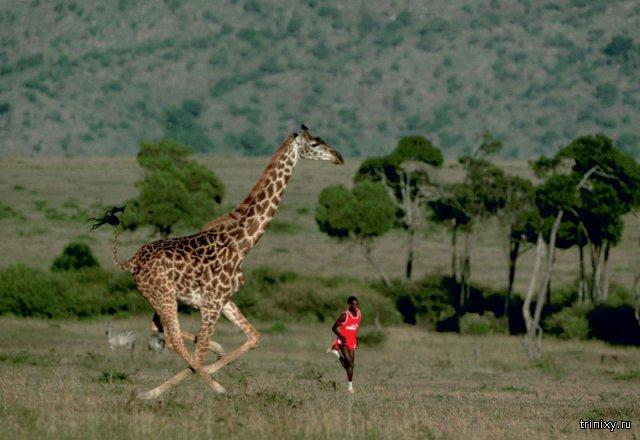 Почему кенийские спортсмены считаются самыми быстрыми бегунами в мире