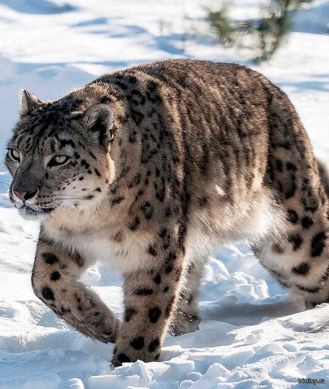 Самые редкие в мире виды животных