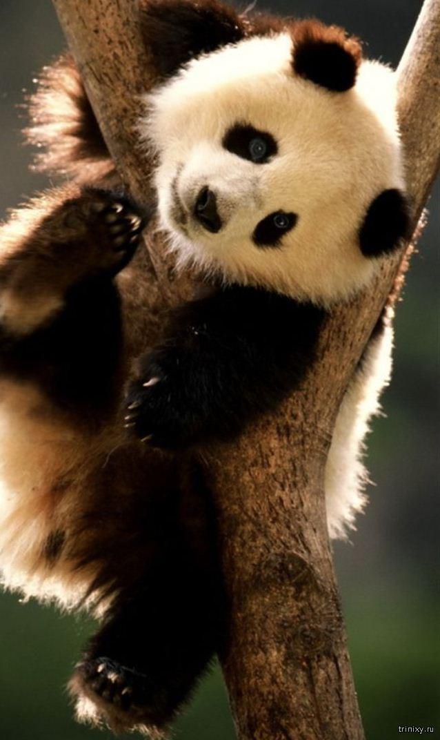 Милые, но смертельно опасные животные