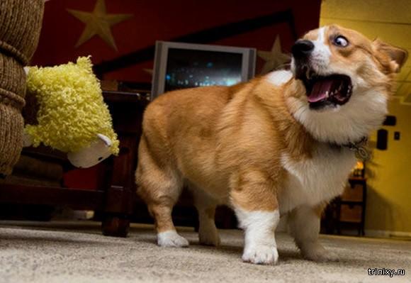 Трусливые собаки
