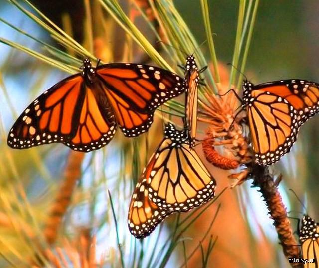 Самые зрелищные и красивые природные явления