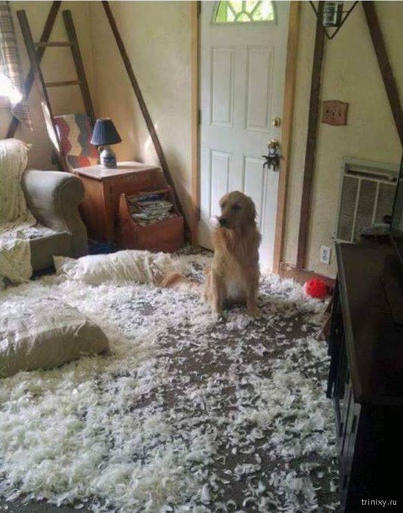 Собака-проказница