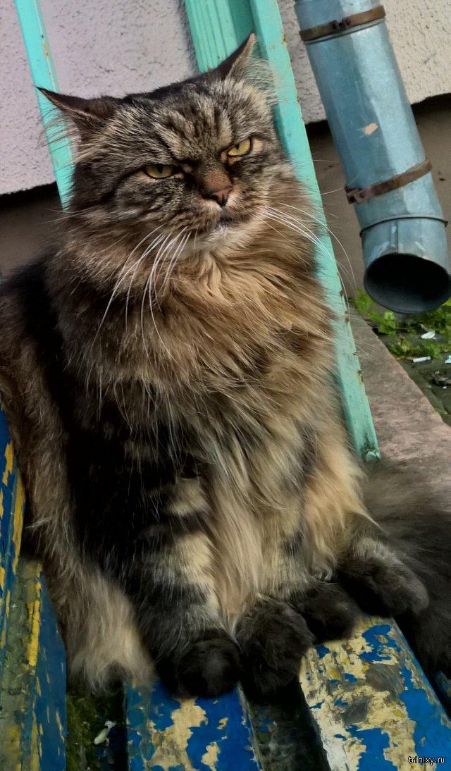 Суровый белорусский котик