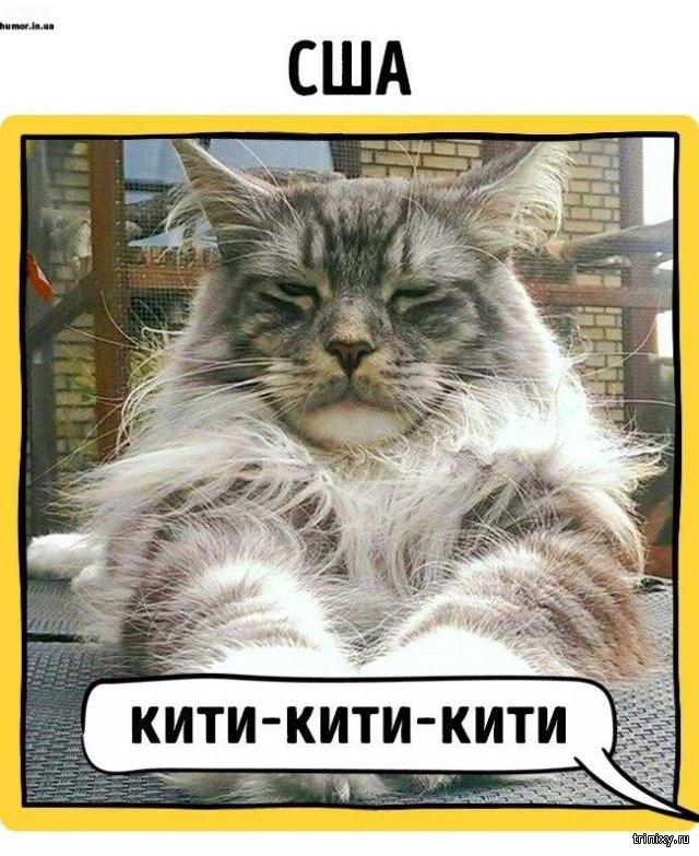 Как зовут кошек в разных странах мира