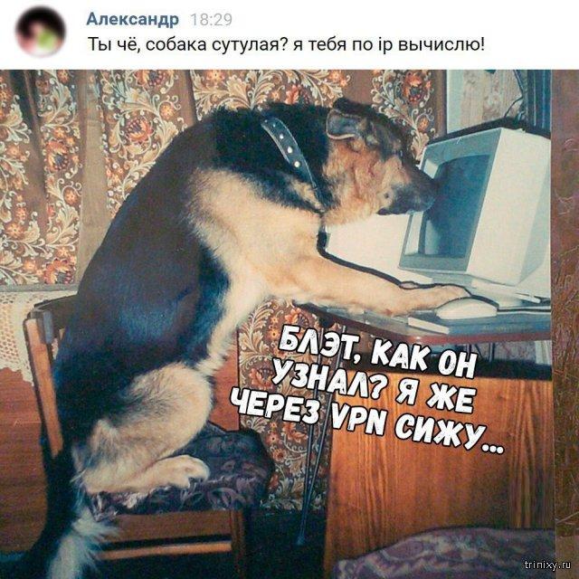 Пёс спалился!