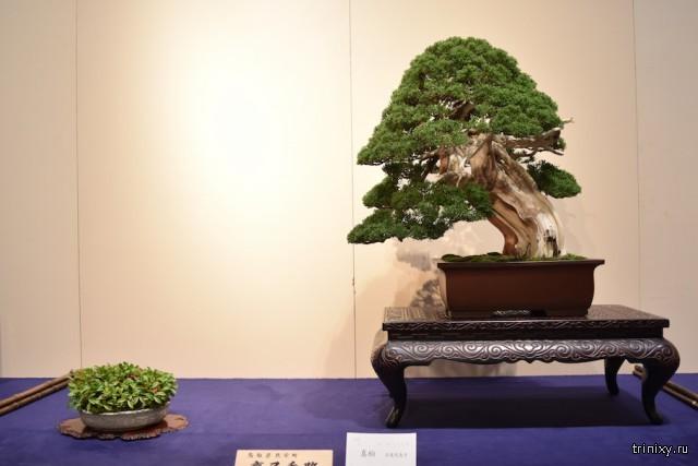 Выставка бонсай - Кокуфутен, 2018 год