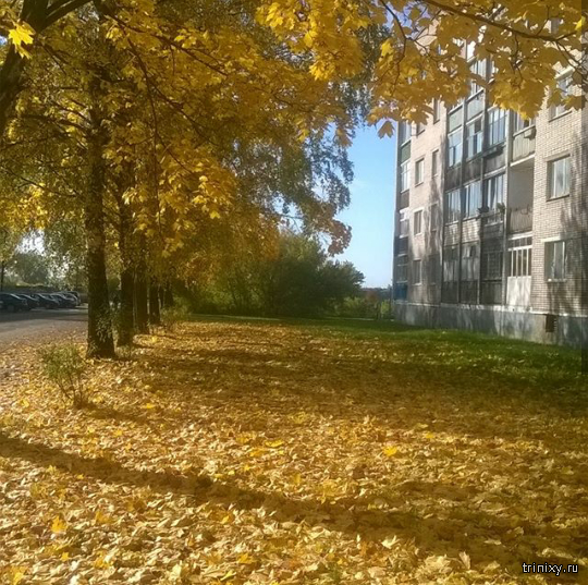 Осень 2017