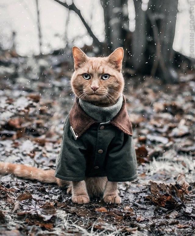 фото кошка в пальто родов характеризуется