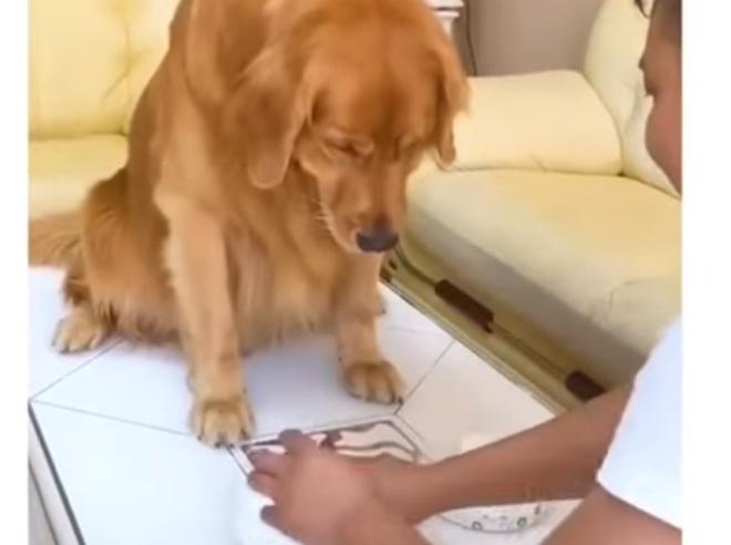 Собака разозлилась, когда поняла, что её обманывают в игре в напёрстки