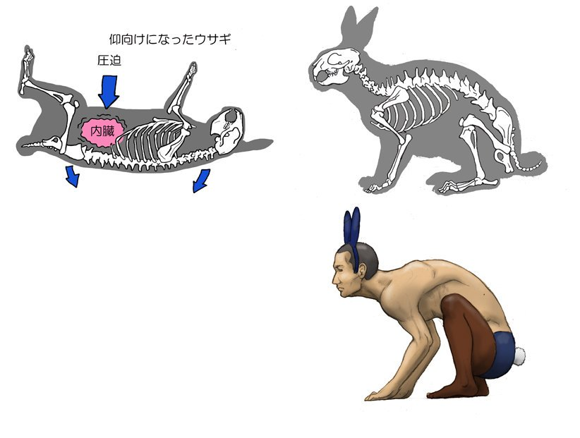 Фантазия японского художника: что было бы, если человек будет похож на животное?