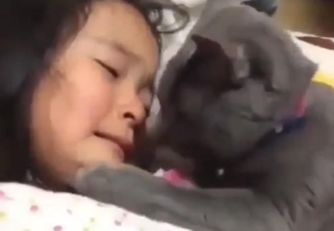 Не реви: кот успокаивает плачущую девочку