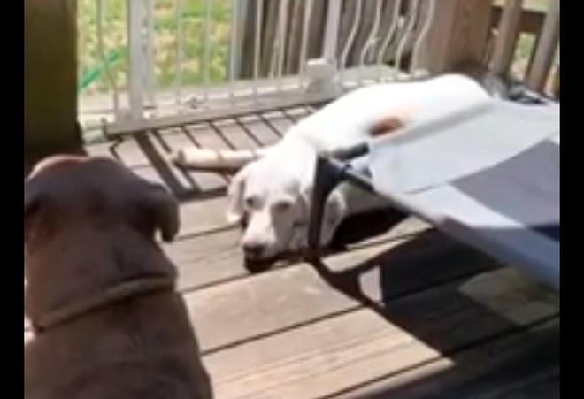 Собаки устроили погром в доме