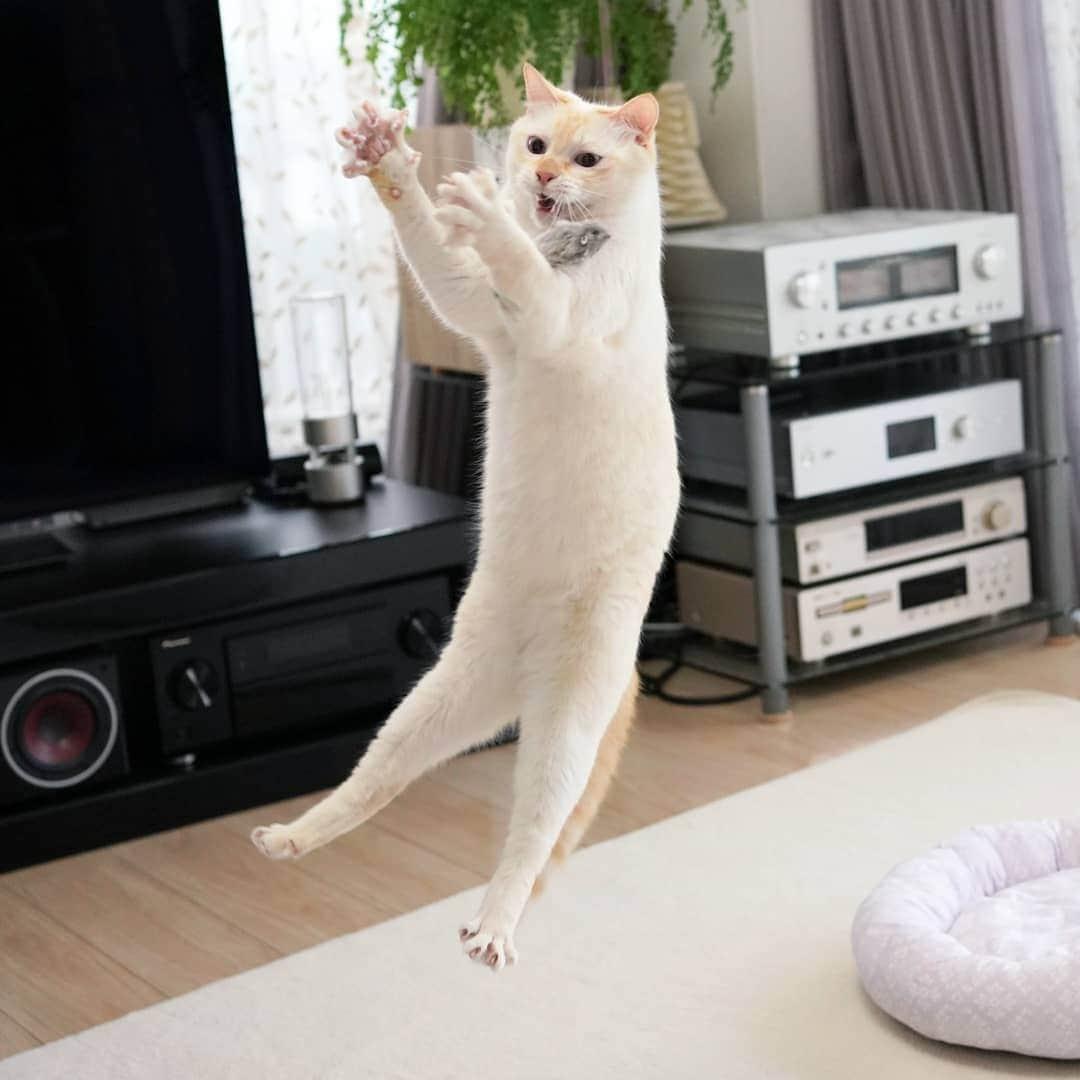 Чако и Сузука: коты, покорившие сеть своей грациозностью