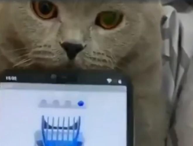 Ещё один способ шокировать кота