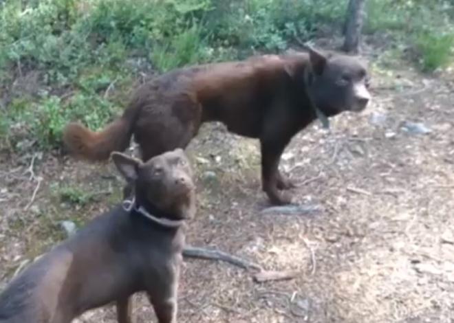 Очень послушные собаки