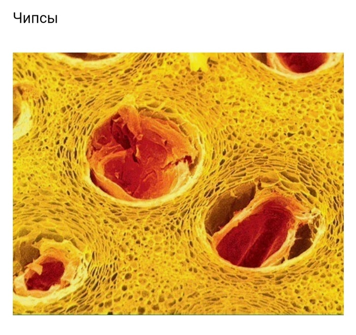 Окружающий мир под микроскопом