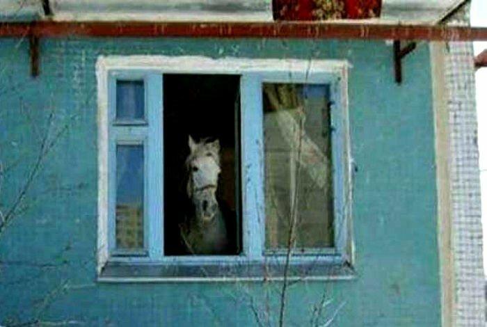 Соседи, которые могут удивить