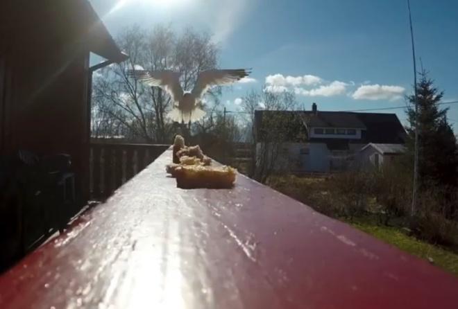 Чайка решила перекусить, а заодно стащила камеру