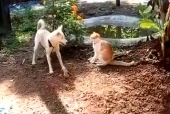 Удар в стиле кунг-фу, исполненный собакой