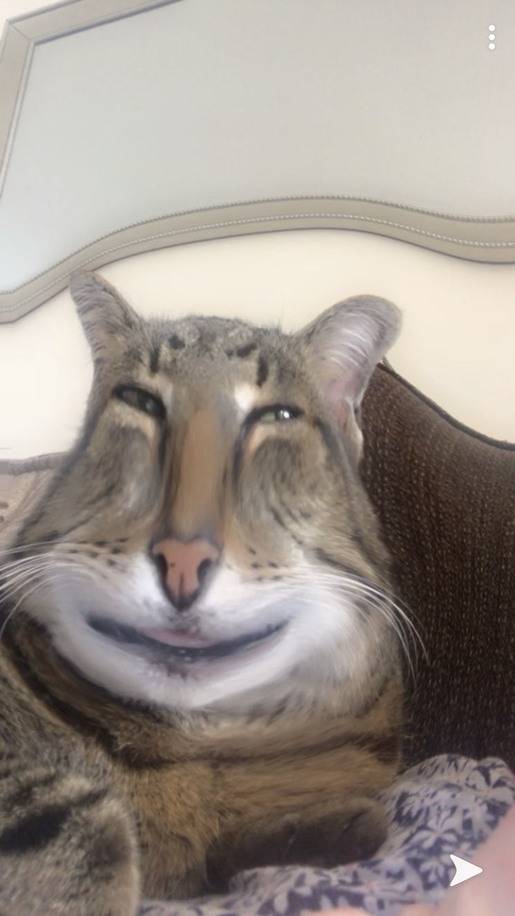 Фильтры Snapchat опробовали на животных