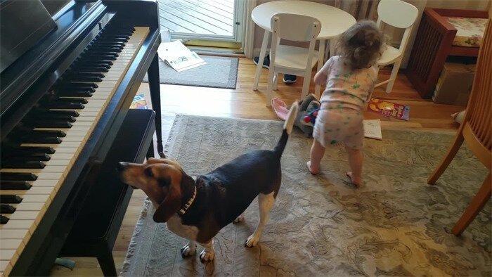 Поразительный дуэт собаки-пианиста и ребёнка