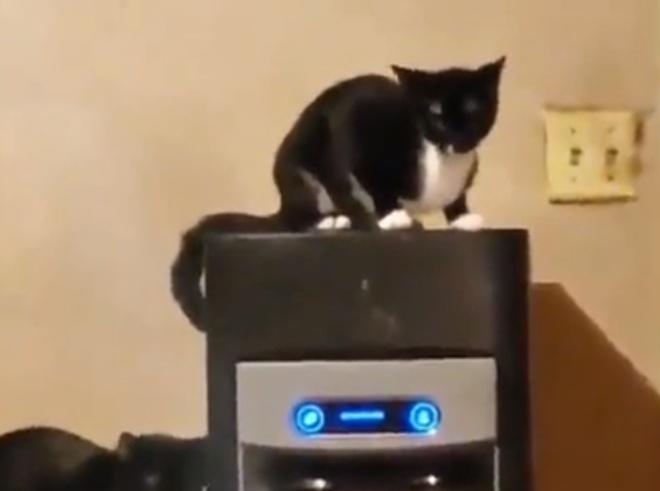 Кот научился пользоваться автоматом для подачи льда