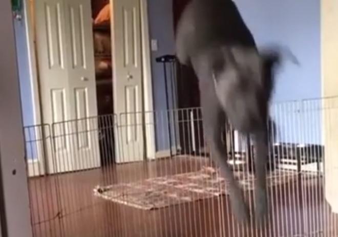 Если забор от собак не помогает, используйте хитрость