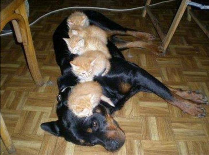 Коты-наглецы или кто в доме хозяин
