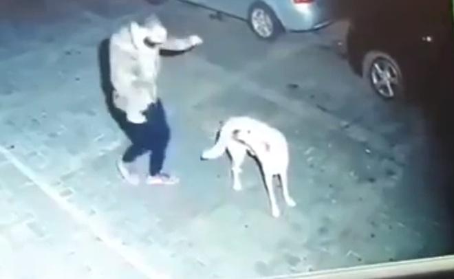 """""""Схватка"""" человека и собаки"""