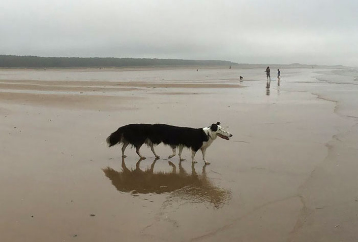 Панорамные фото животных, на которые не взглянешь без слез