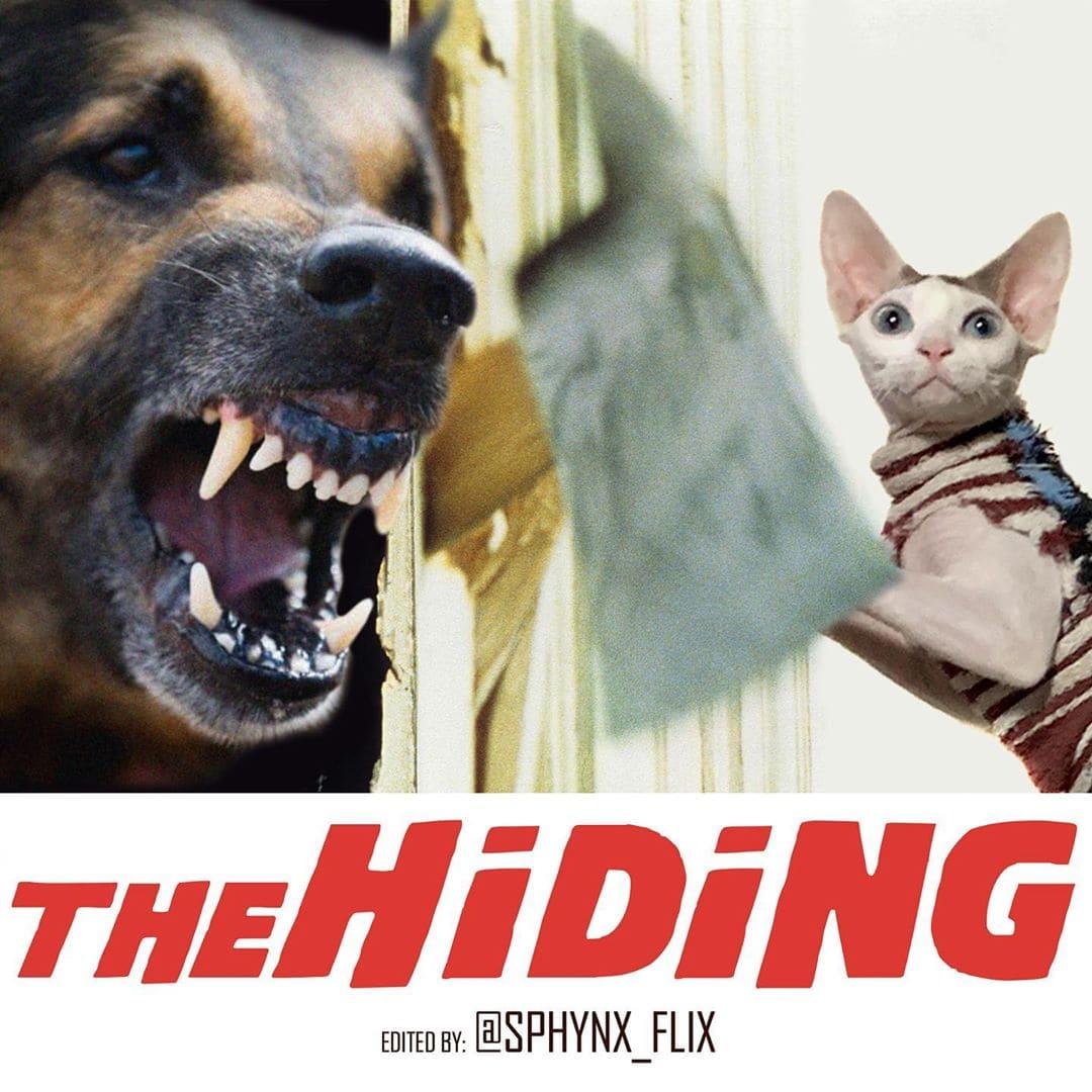 Фотограф показал, как выглядели бы постеры популярных фильмов, если бы в них снимался его кот