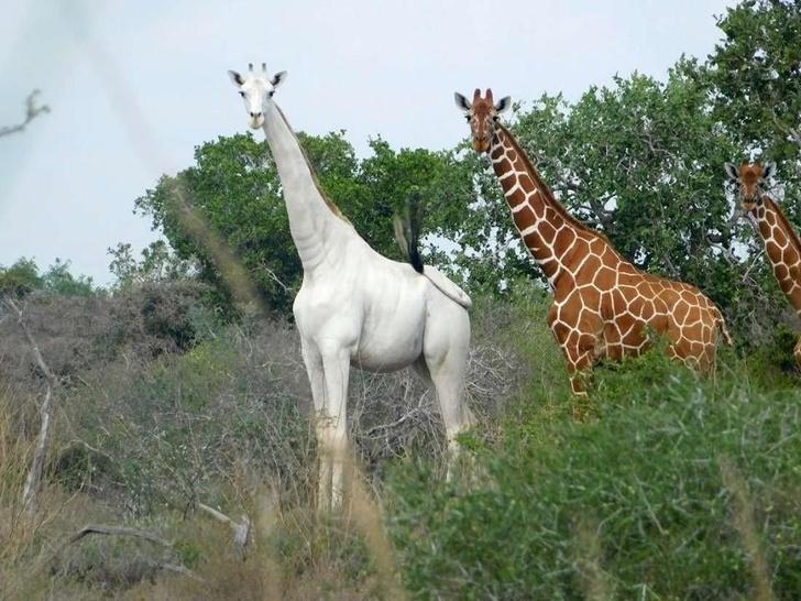 Удивительные фото природы, которые не мешало бы добавить в школьные учебники